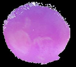 doula-review-logo